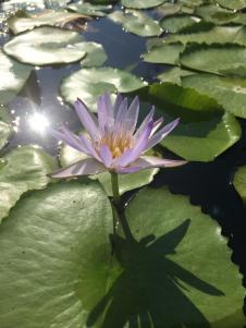 lotus flower yoga teacher training hong kong