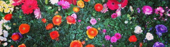 spring time flowers lisadeviyoga